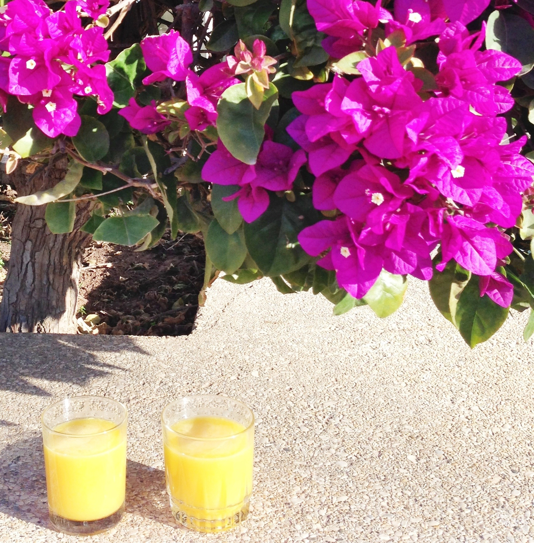 Morgenmad Agadir