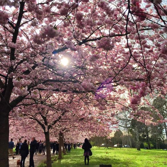 Bispebjerg Kirkegård i pink