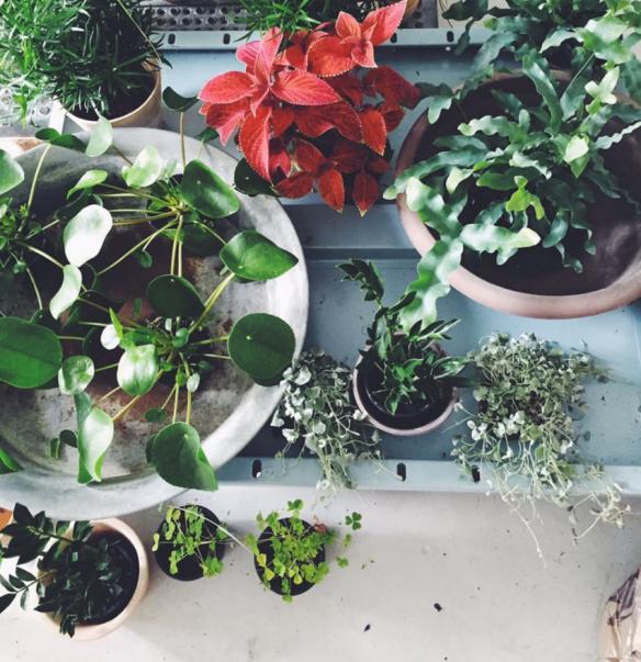 Planter og urter fra Altaneriet
